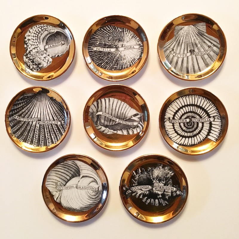 Conchyliorum / Shell Coasters